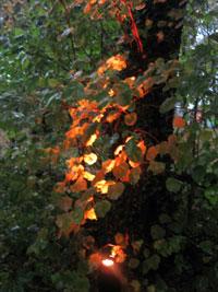 lit up tree