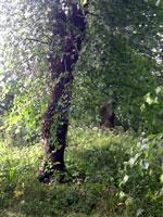 trees in sunshine